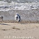 Seagulls at Chesapeake Bay<3 by Leah Snyder