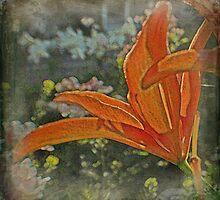 Orange Lily by FeeBeeDee