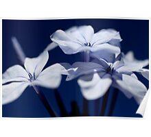"""""""Feeling blue"""" Poster"""