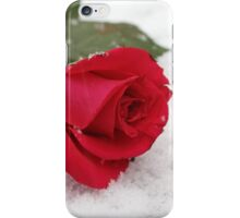 A rose on the snow iPhone Case/Skin
