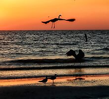 Birds at Sunset, Indian Shores by Tarrby