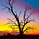 Tree with colourful sky by John Vandeven