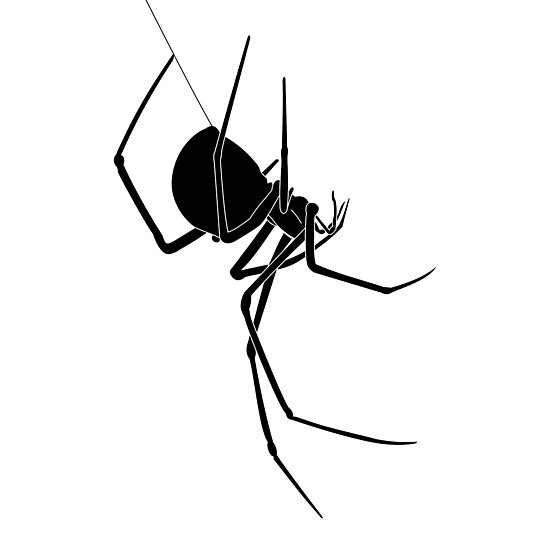 Spider by sjaros