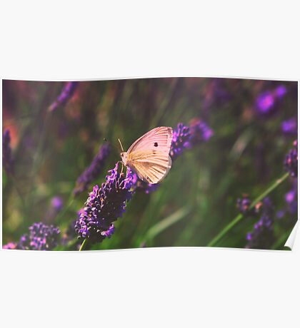 White wings on lavender Poster