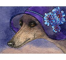 Whippet of Mystery Photographic Print