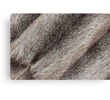 River rat coypu or nutria rough fur texture Canvas Print