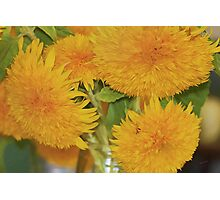 Puffy Golden Delight Photographic Print