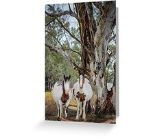 Mares in waiting  Greeting Card