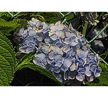 Blue Beauty Photographic Print