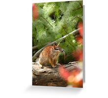 He's Not being Rude! Greeting Card