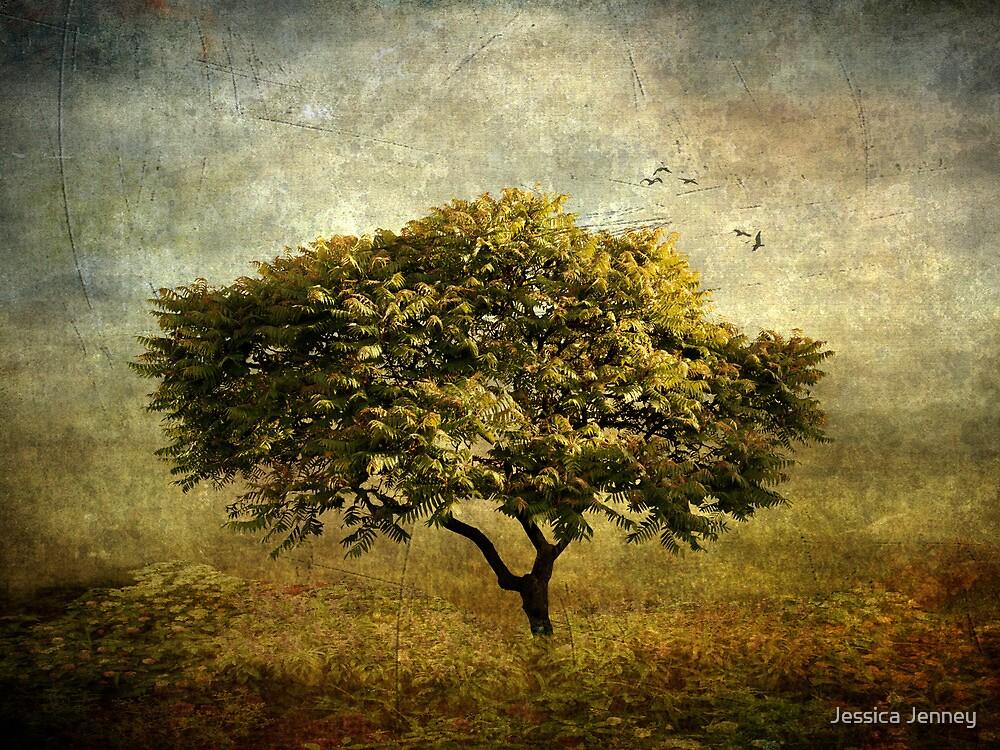Mimosa   by Jessica Jenney