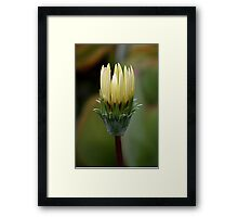 Waiting for the noon day sun Framed Print