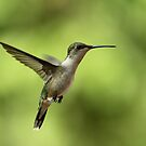 Hovering Hummer by Gregg Williams