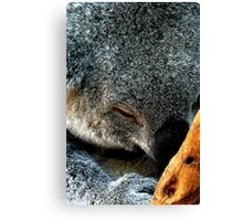 Atop a Tree a Koala Sleeps Canvas Print