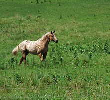 Beauty On The Move! by Tracy Faught