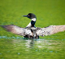Loon by Jane Best