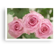 Pink faded roses Canvas Print
