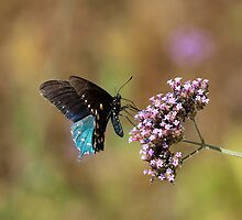 Lepidoptera by RobSimpson