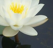 Monet's Lilly by GeorgiaLove