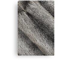 River rat coypu or nutria rough fur background Canvas Print