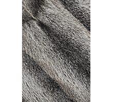 River rat coypu or nutria rough fur background Photographic Print