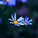 Blue can calm you  by jayant