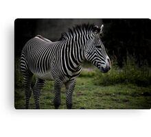 Seeing Stripes Canvas Print