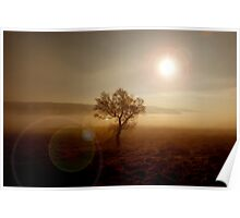 Derbyshire tree Poster