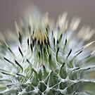 Thistle Top by Sean Farragher