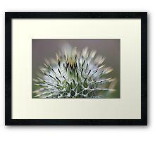 Thistle Top Framed Print