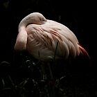 The Flamingo by shutterjunkie