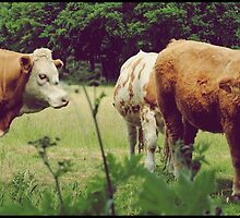 The cows want it back by hanza