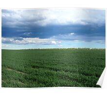 Spring Wheat Under Clouds at Mansfield, Washington Poster