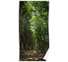 Chaumont forest Poster
