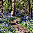 A Walk with the Bluebells by saxonfenken