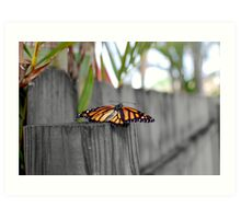 Newly Hatched Monarch Butterfly Art Print