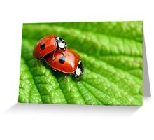 Ladybirds - Increasing the troops Greeting Card