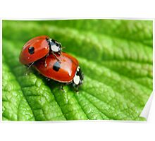 Ladybirds - Increasing the troops Poster