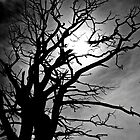 Moody Dead Tree B&W by ArtforARMS