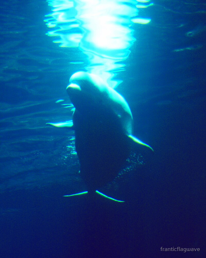 """""""Silhouette Of The Deep The Grand Beluga"""" by franticflagwave"""