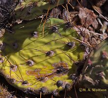 Prickly Pear Cactus by Monica Wolfson
