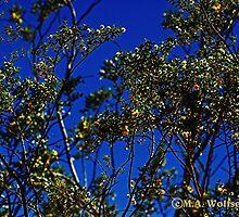 Desert Bloom by Monica Wolfson