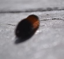 Wooly Worm On The Move by AliciaMarieB