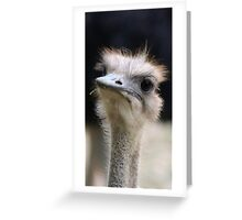 A Day at the Zoo Greeting Card