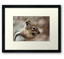 Golden Mantled Ground Squirrel  Framed Print