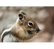 Golden Mantled Ground Squirrel  Photographic Print