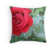 Moist Red Rose Throw Pillow