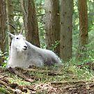 Mountain Goat by Soulmaytz