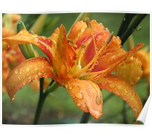 Day Lily After the Rain Poster