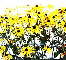 Dasies by PPPhotoArt